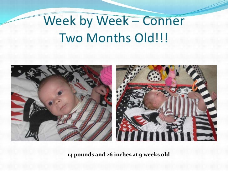 Week by Week – ConnerTwo Months Old!!!<br />14 pounds and 26 inches at 9 weeks old<br />