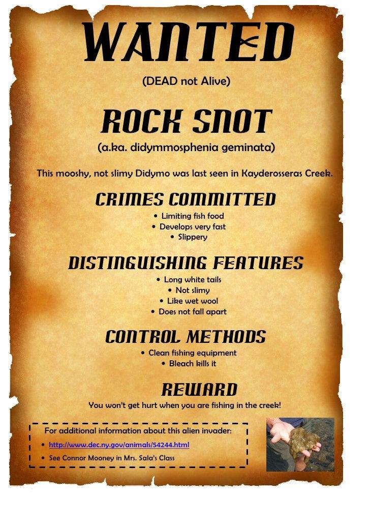 WANTED              (DEAD not Alive)                  Rock Snot                 (a.ka. didymmosphenia geminata)This mooshy...