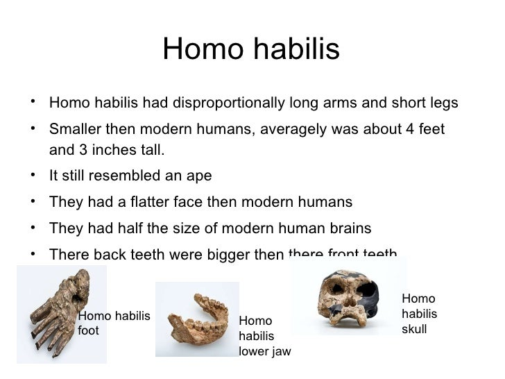 the physical characteristics of homo habilis Homo habilis - free download as  physical characteristics • estimated brain capacity about 510-750 cc  how does their skeleton/ skull compare to homo sapiens 7.