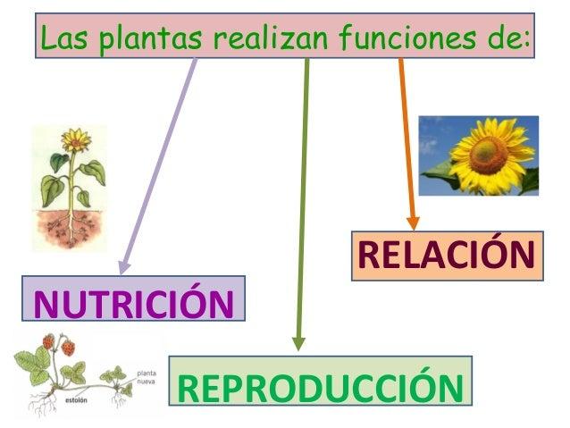 Cono 4 tema 4 las funciones vitales en animales y plantas for Funcion de las plantas ornamentales
