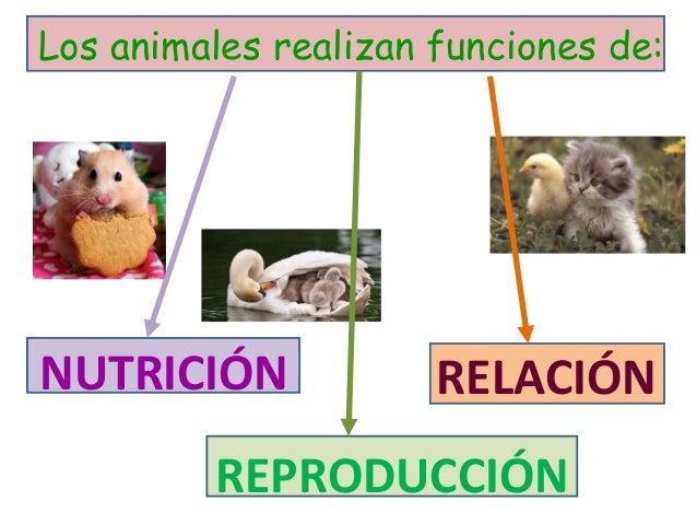 Cono 4 tema 4 las funciones vitales en animales y plantas