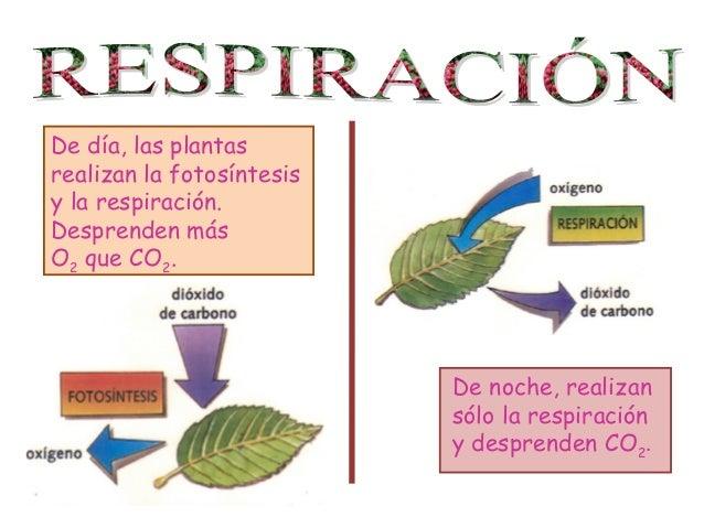 Respiracion De Las Plantas Gif: Cono 4º Tema 4 Las Funciones Vitales En Animales Y Plantas