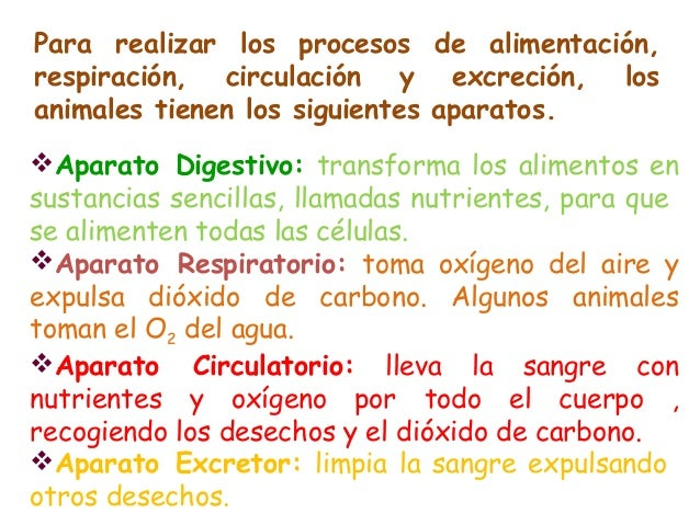 Cono 4 tema 4 las funciones vitales en animales y plantas - Alimentos para la circulacion ...