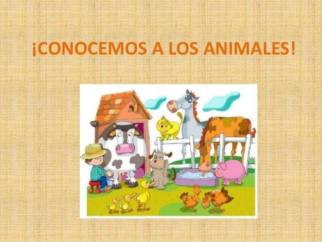 ¡CONOCEMOS A LOS ANIMALES!