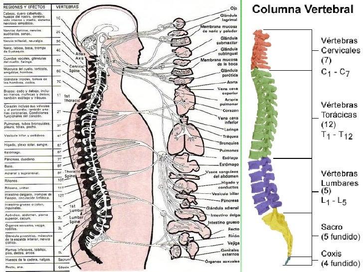 Conoces Tu Columna Vertebral