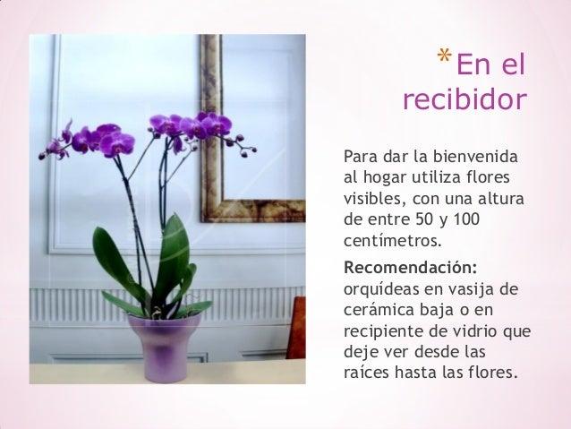 Consejos para decorar tu hogar con flores naturales for Consejos para decorar tu hogar
