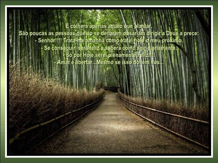 E colherá apenas aquilo que plantar.São poucas as pessoas que ao se deitarem ousariam dirigir a Deus a prece:      - Senho...