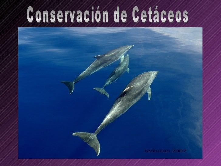Conservación de Cetáceos