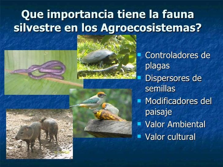 Conservaci n de fauna en agroecosistemas ut for Que es una oficina y su importancia