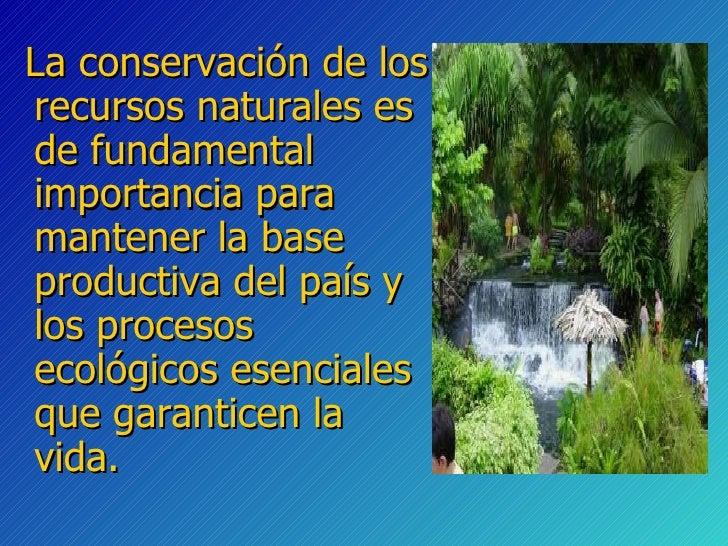 Conservacion de los recursos naturales for Importancia de los viveros forestales