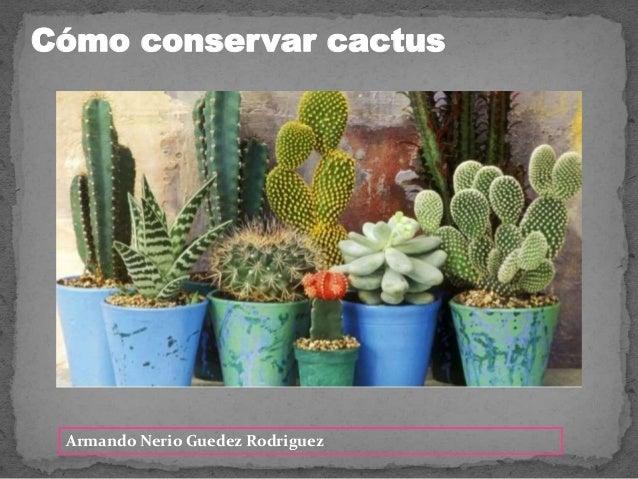 Armando Nerio Guedez Rodriguez C�mo conservar cactus