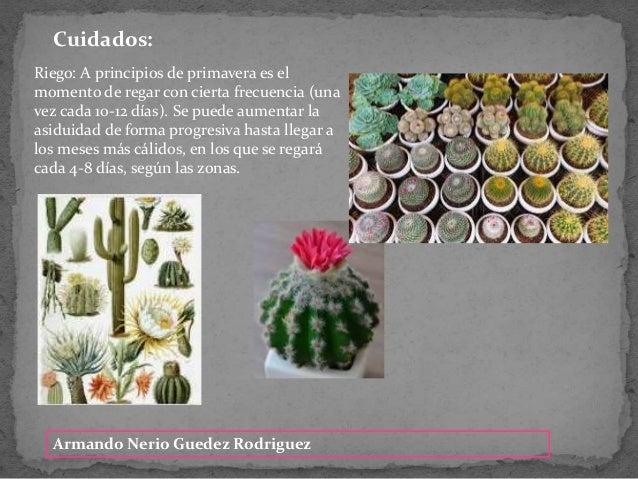 Armando Nerio Guedez Rodriguez Cuidados: Riego: A principios de primavera es el momento de regar con cierta frecuencia (un...