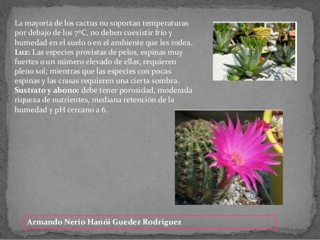Armando Nerio Han�i Guedez Rodriguez La mayor�a de los cactus no soportan temperaturas por debajo de los 7�C, no deben coe...