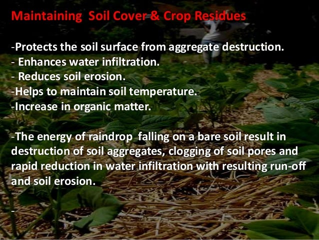 Crop selection & Crop Rotation • Crop selection and choice of cultivars are important decisions made by producers for dryl...