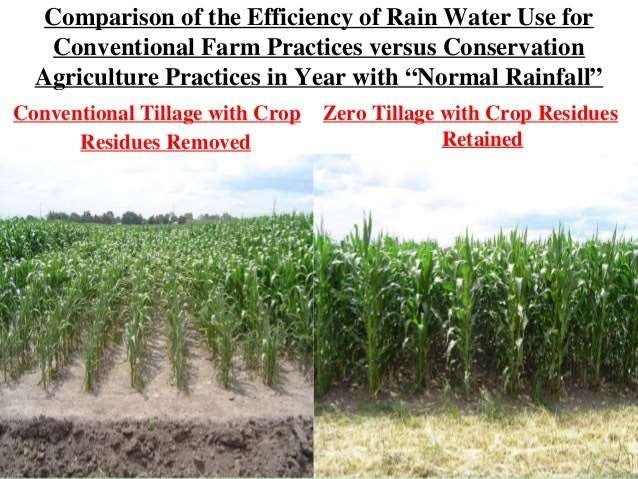 • The relationship between soil loss by wind erosion and the percent of soil cover. • Covering 20 % of the surface reduced...