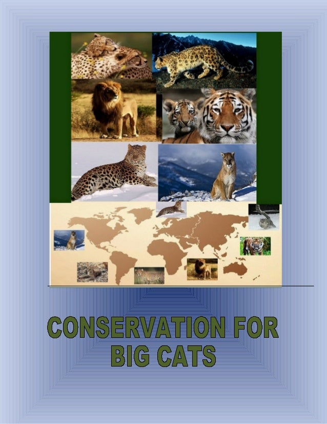 CONSERVATION FOR BIG CATSProtect land where big cats live (habitats)Identify and monitor high priority animal populations ...