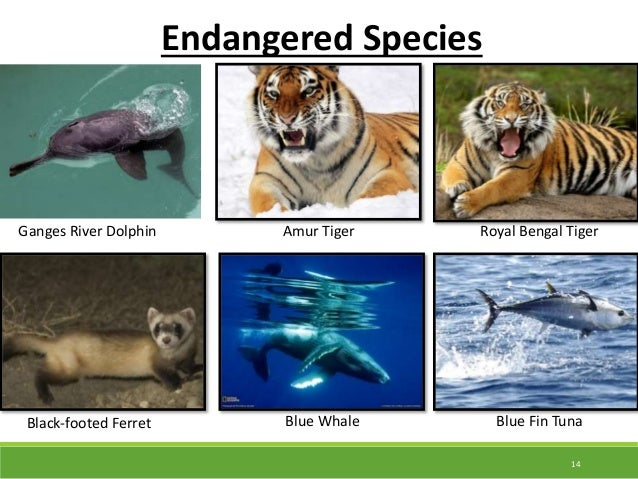 biodiversity and endangered species from el Existence of a significant number of endangered species  very high, with fifty  species of flora being endemic to la gomera and another 122 species endemic.
