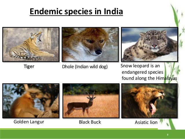 essay on conservation of wildlife in india Essay on endangered wildlife in india essay - endangered wildlife in india e ndangered species is the second most severe conservation status for wildlife in.