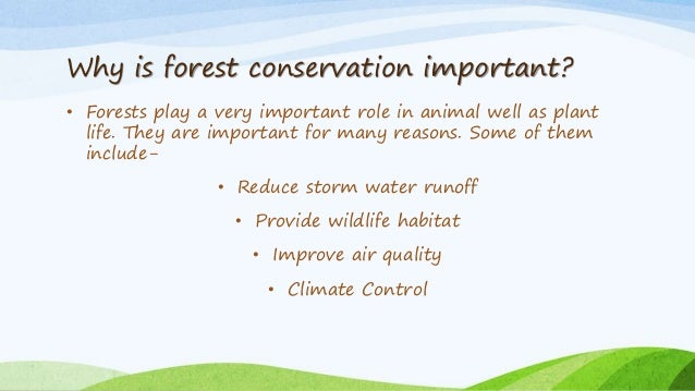 how to conserve forests in points