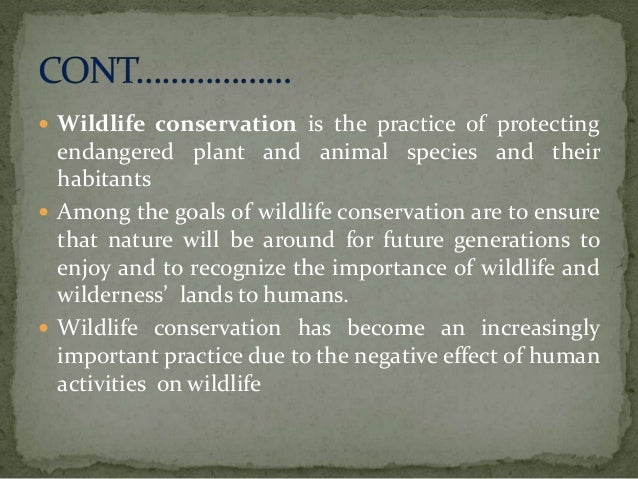 conservation of forests and wildlife essay Wildlife and conservation efforts in africa in the core areas of forests [tags: tourism, conservation essay will focus on two animal.