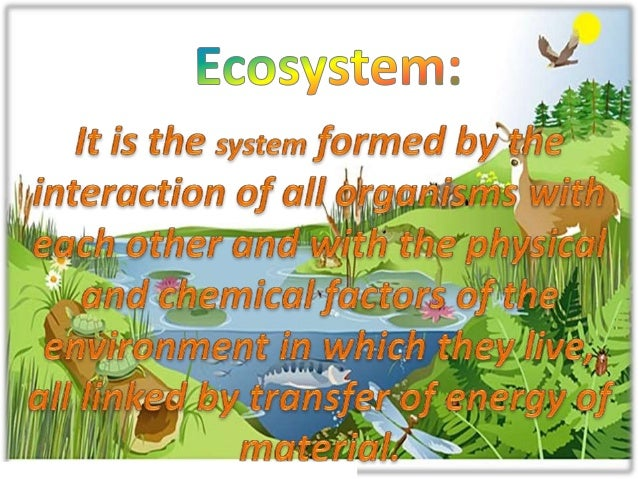 Conservation of plants and animals Slide 3