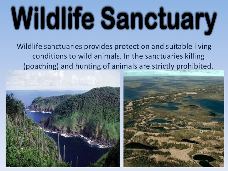 conservation of plants animals wildlife sanctuaries provides protection