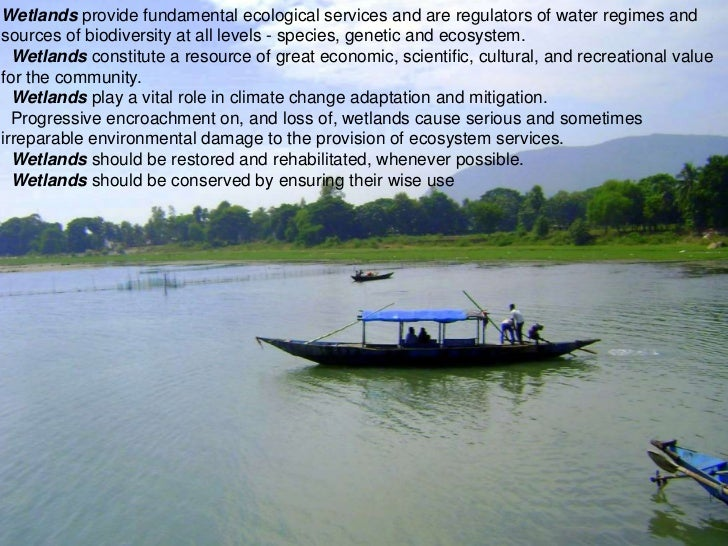"the importance of wetlands to the ecosystem The importance of wetlands  wetlands are indispensable for the countless benefits or ""ecosystem services"" that they provide humanity, ranging from freshwater supply, food and building materials, and biodiversity, to flood control, groundwater recharge, and climate change mitigation."