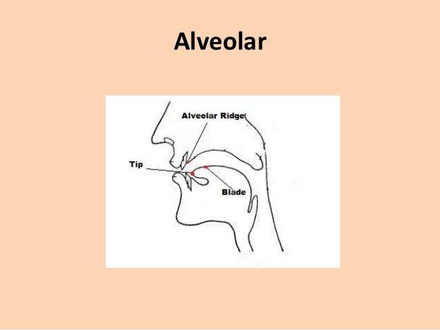 Pronunciation - R: alveolar trill vs. uvular trill ...
