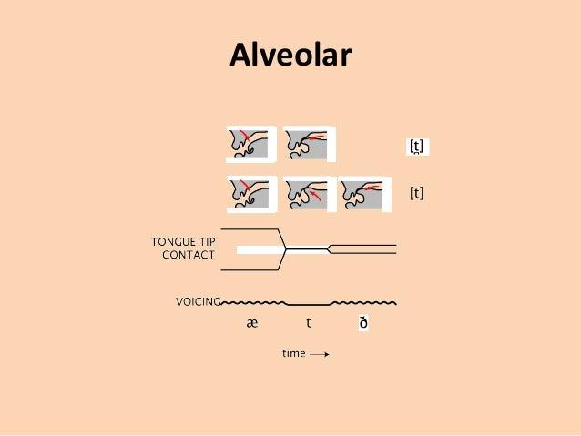 Talk:Dental, alveolar and postalveolar trills - Wikipedia
