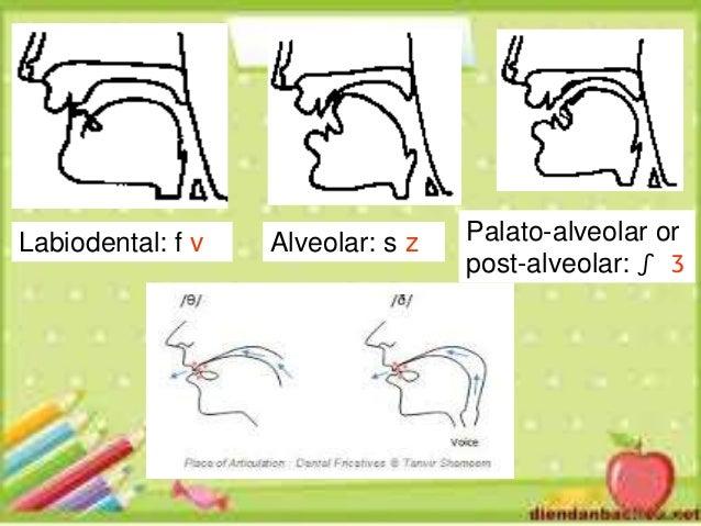 Ace Linguist: The Alveolar Trill