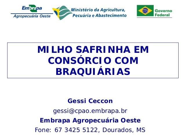 Apresent MILHO SAFRINHA EM CONSÓRCIO COM BRAQUIÁRIAS Gessi Ceccon gessi@cpao.embrapa.br Embrapa Agropecuária Oeste Fone: 6...