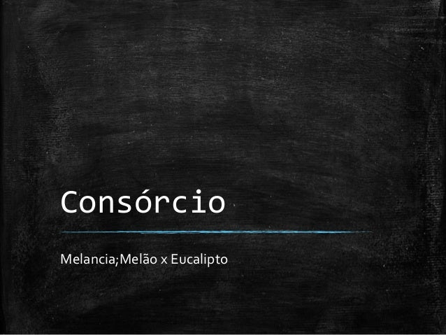 Consórcio Melancia;Melão x Eucalipto