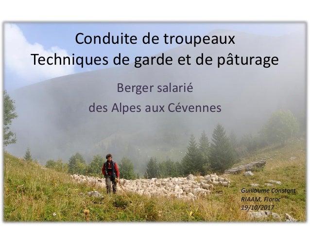 Conduite de troupeaux Techniques de garde et de p�turage Berger salari� des Alpes aux C�vennes Guillaume Constant RIAAM, F...