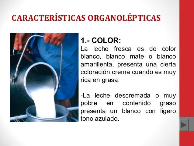 CARACTERÍSTICAS ORGANOLÉPTICAS 1.- COLOR: La leche fresca es de color blanco, blanco mate o blanco amarillenta, presenta u...