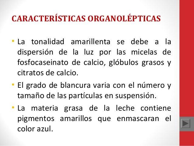 CARACTERÍSTICAS ORGANOLÉPTICAS • La tonalidad amarillenta se debe a la dispersión de la luz por las micelas de fosfocasein...