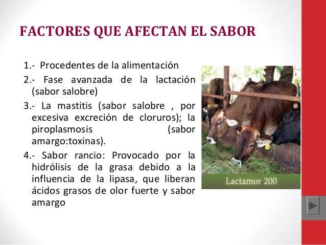 FACTORES QUE AFECTAN EL SABOR 1.- Procedentes de la alimentación 2.- Fase avanzada de la lactación (sabor salobre) 3.- La ...