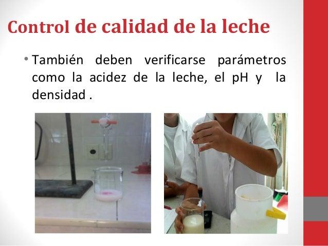 Control de calidad de la leche • Estas pruebas se realizan con el fin de reconocer las leches no aptas y así evitar posibl...
