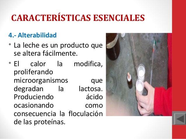 CARACTERÍSTICAS ESENCIALES 4.- Alterabilidad  • La leche es un producto que se altera fácilmente. • El calor la modifica, ...