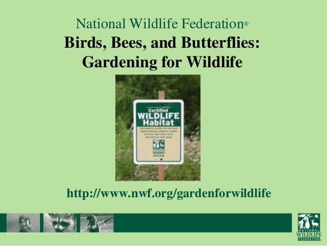 National Wildlife Federation®  Birds, Bees, and Butterflies: Gardening for Wildlife  http://www.nwf.org/gardenforwildlife