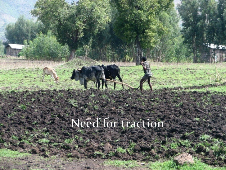 constraints of livestock production in ethiopia pdf