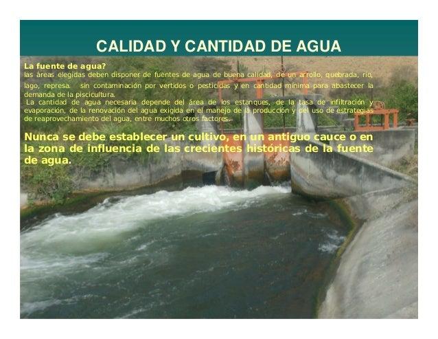 Construccion de estanques de tierra c for Estanques para piscicultura