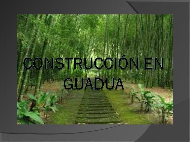 LA GUADUA (Angustifolia Kunt) Bambú gigante Acero vegetal