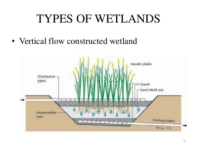 Constructed Wetland Management