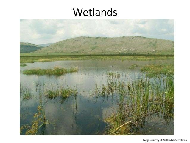 Wetlands           Image courtesy of Wetlands International
