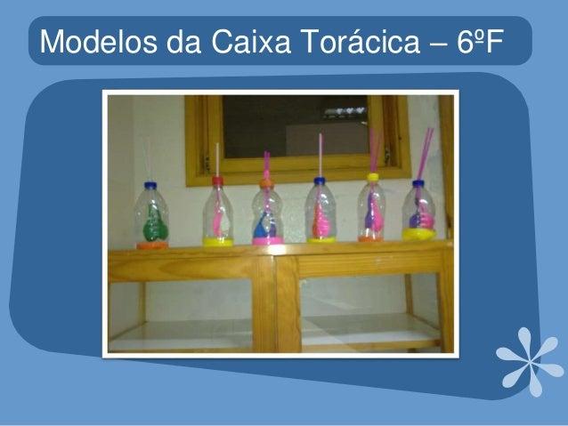 Construção de modelos da caixa torácica Slide 3