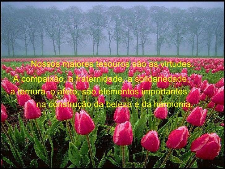 Nossos maiores tesouros são as virtudes.  A compaixão, a fraternidade, a solidariedade,  a ternura, o afeto, são elementos...
