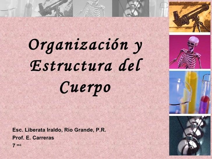 Organización y      Estructura del         CuerpoEsc. Liberata Iraldo, Río Grande, P.R.Prof. E. Carreras7 mo