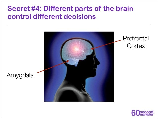 Secret #7: Novelty is the single most important factor in capturing our brains attention
