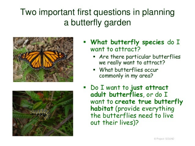 11. © Project SOUND Two Important First Questions In Planning A Butterfly  Garden ...