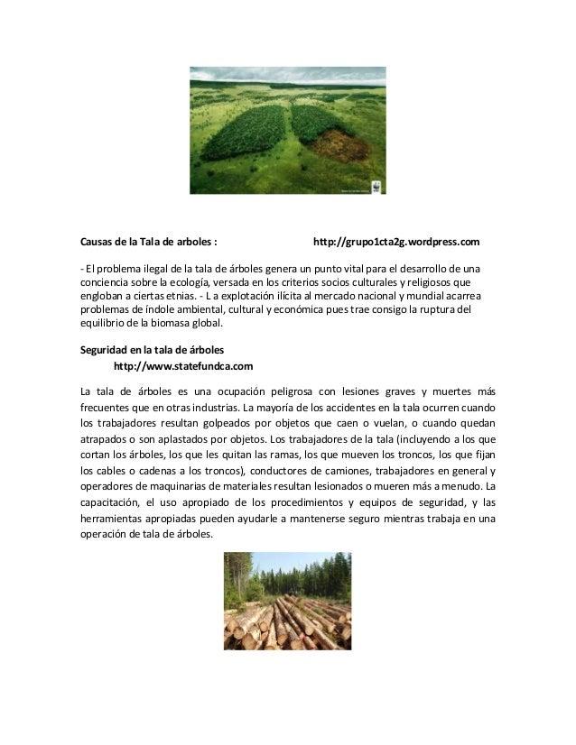 Causas de la Tala de arboles : http://grupo1cta2g.wordpress.com- El problema ilegal de la tala de árboles genera un punto ...